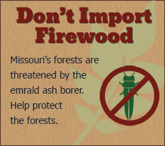 Don't import firewood - Missouri's forests are threatened by the emerald ash borer.  Help protect the forests.